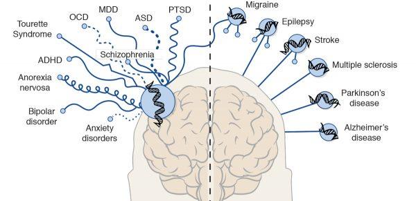 Brain study 4